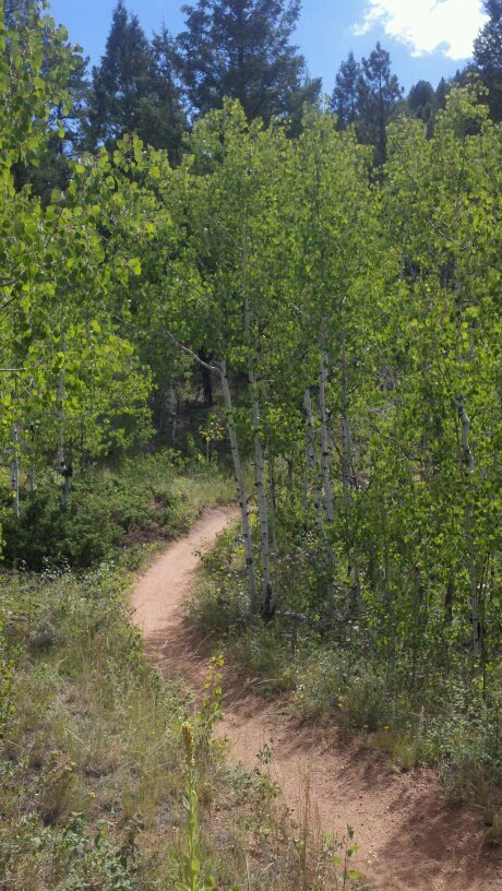 Another beautiful stretch of the Colorado Trail